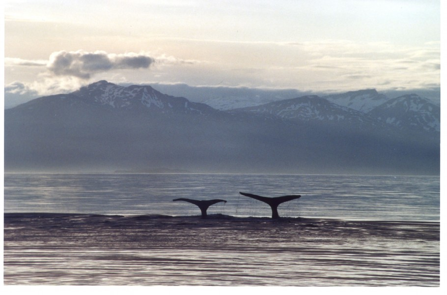 A Life Among Whales - Pictures Of Whales